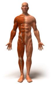 formation anatomie et physiologie adaptée au spa praticien ou au masseur de massage de bien-être